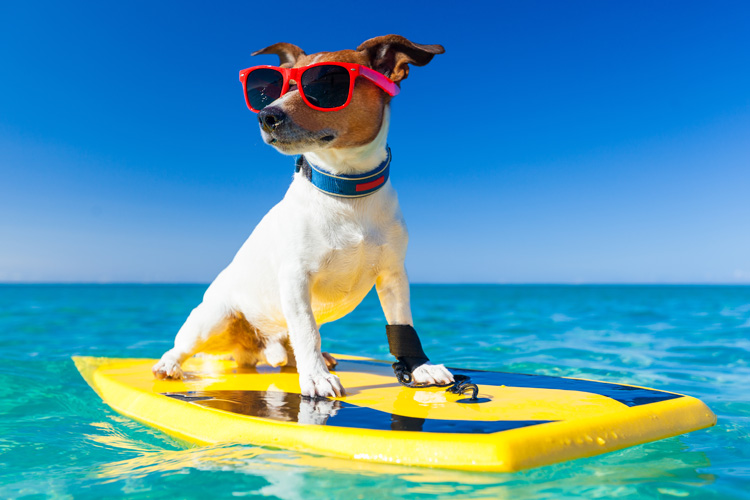Surf dogs: train and teach your best friend the art of wave riding | Photo: Shutterstock