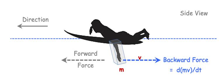 Momentum theory of a fish swimming
