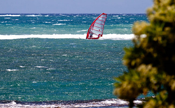 Tom Hammerton: Hawaiian speed windsurfing records