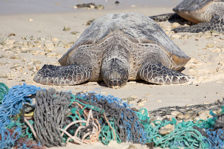 Abandoned fishing nets: a threat to sea life | Photo: USFWS/Creative Commons