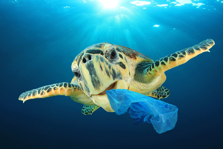 Plastic bags: a threat to the oceans and marine life | Photo: Shutterstock