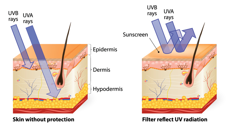 UV radiation: the penetration of UVA and UVB rays in our skin