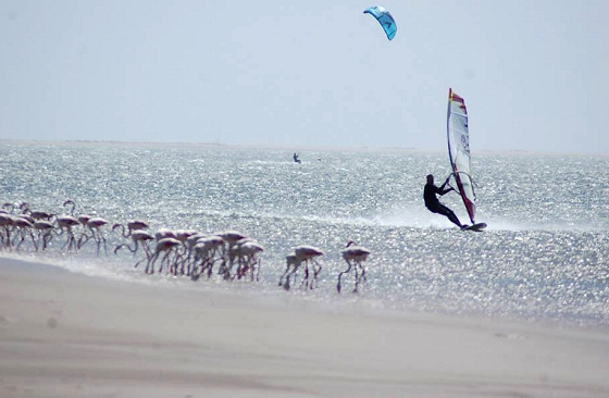 Walvis Bay Speed Week: flamingos love to watch speed windsurfers