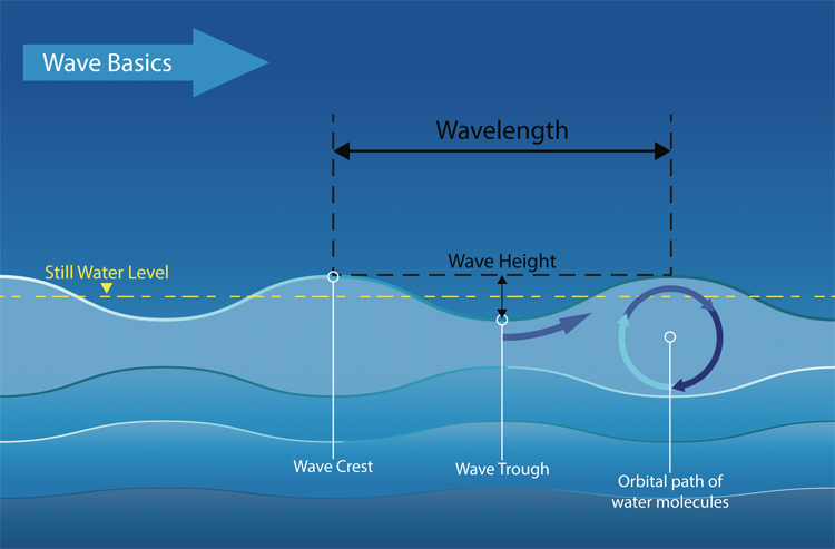 Waves circulate the water as they travel