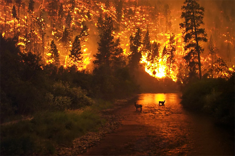 Wildfires: a consequence of heat waves and severe drought | Photo: Creative Commons