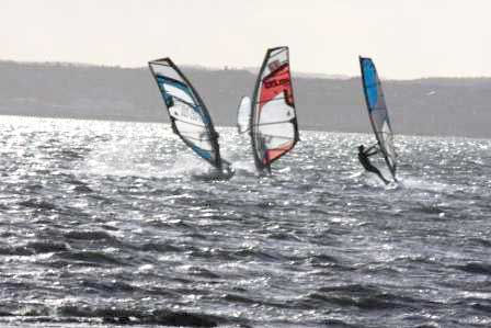 NZ windsurfers: also known as Kiwis