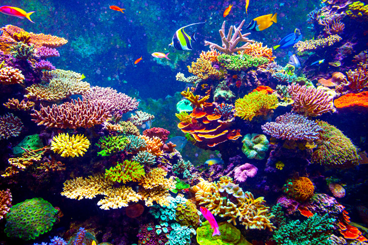 June 1st, World Reef Day: to defend and protect the corals